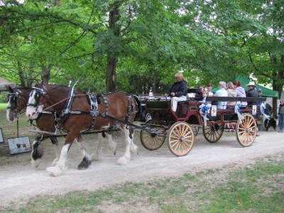 Ritchie's Clydesdales take you on an old fashioned wagon ride at Beautiful Joe's Autumn Adventure
