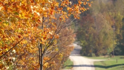 Meaford autumn country road
